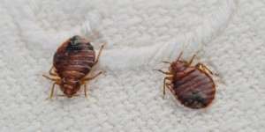 bed bug control redondo beach ca